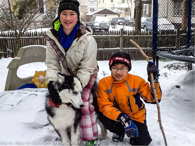 "Nekoda (Formerly ""Nomad"") happy in the snow with his new family."