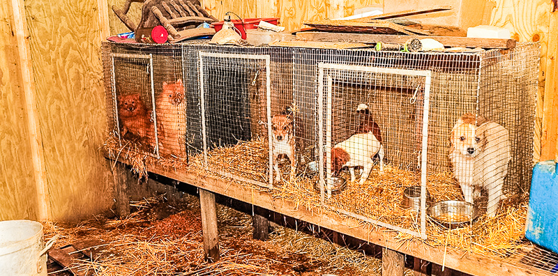 """About """"Puppy Mills"""" 