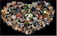 heart dog for fb adopt a pet